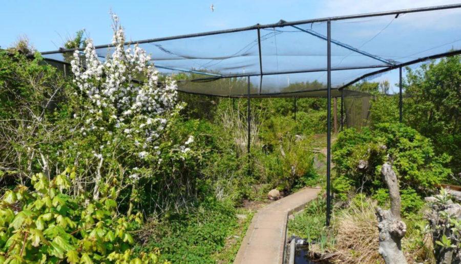 Entfällt leider mindestens bis Ende Juni 2020: Der Fanggarten der Vogelwarte