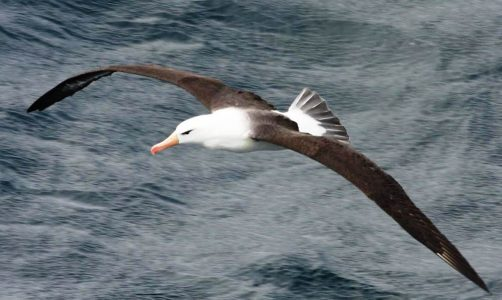 Faszination Vogelflug – Vortrag